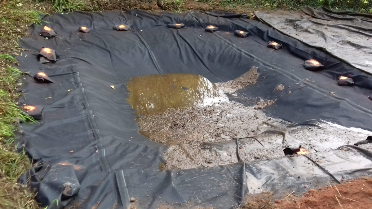 Pond Project Update